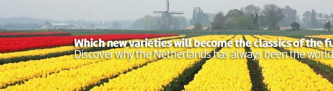 Put to the test at the Tulip Trade Event
