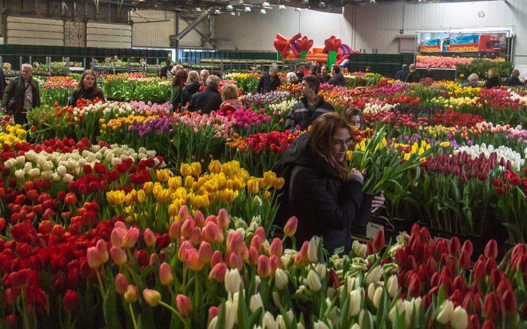 Tulip Trade Event viert eerste lustrum