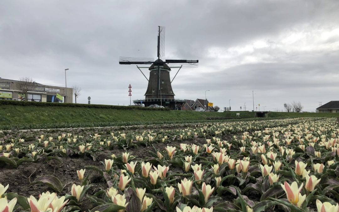 No lack of innovations at the Tulip Trade Event